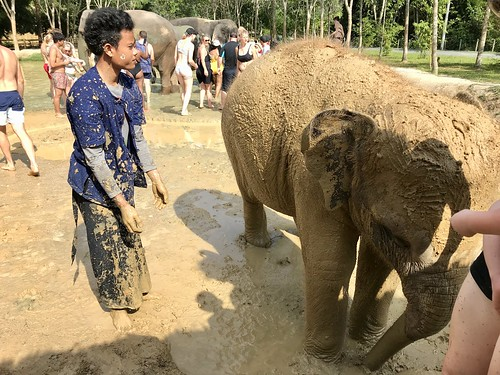 Mud bath, at Green Elephant Sanctuary