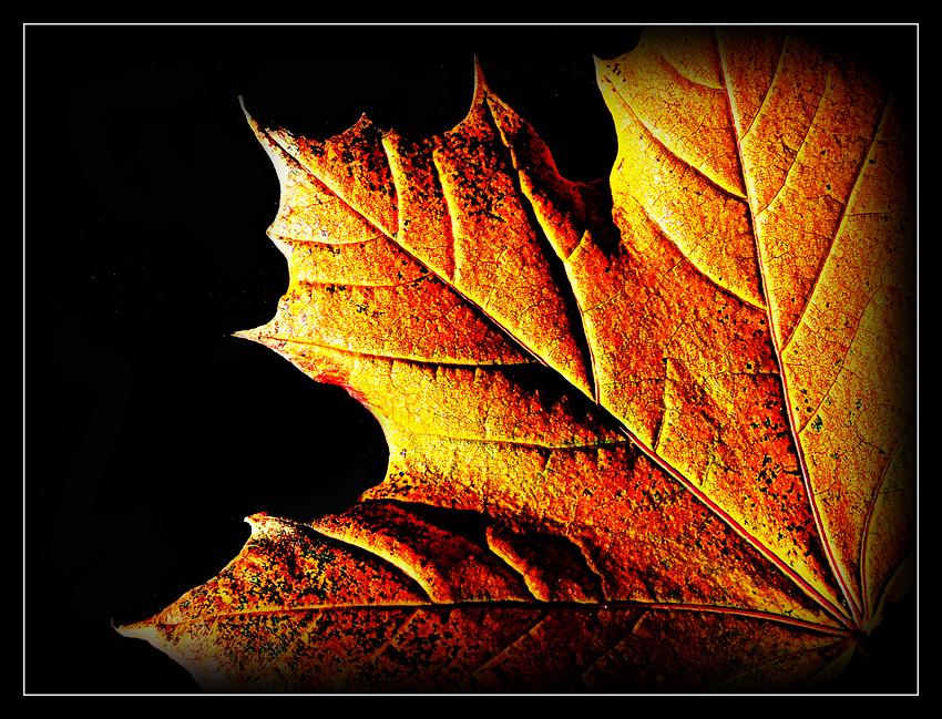 Gold leaf.............