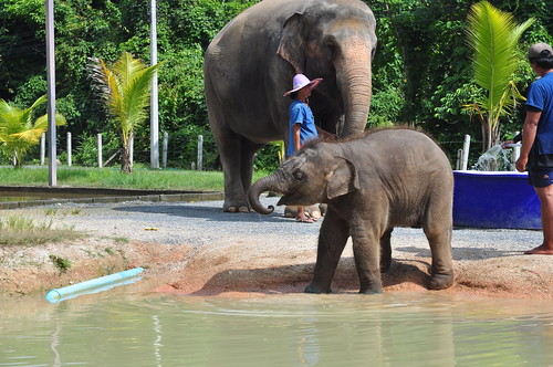 Mama and baby, the Green Elephant Sanctuary