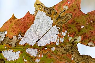 Leaf Map