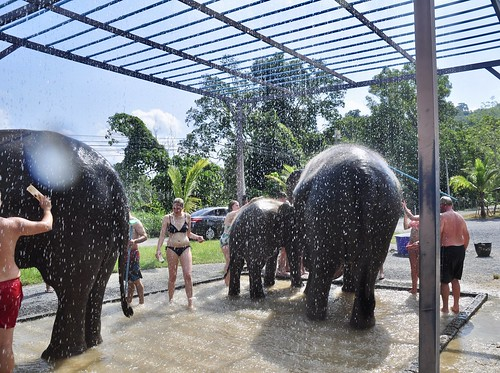 Elephant shower, Green Elephant Sanctuary