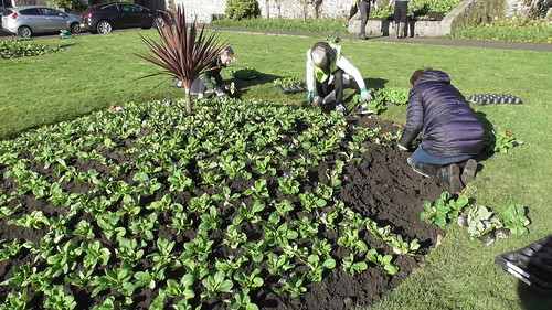 Planting Up Whickham Church Green Oct 19 (7)