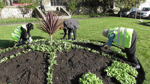 Planting Up Whickham Church Green Oct 19 (6)