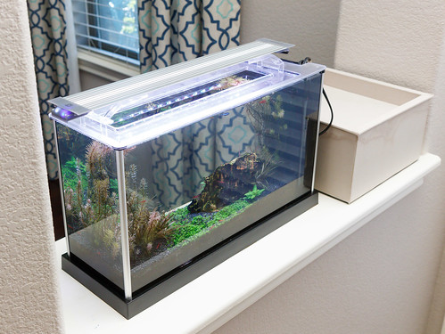 Finnex Planted+ 24/7 HLC Light Fixture on a Fluval Spec V Planted Aquarium