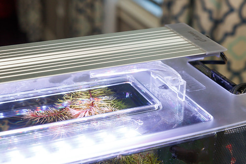 Finnex Planted+ 24/7 HLC Light Fixture sitting on acrylic top of Fluval Spec V Planted Tank