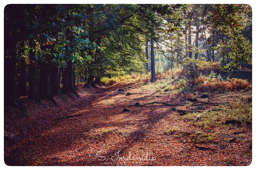 Autumn_Light