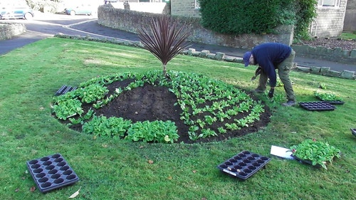 Planting Up Whickham Church Green Oct 19 (2)