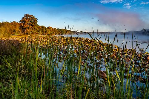 kansascity kansas unitedstatesofamerica lake park county wyandotte mist water fall brown green lillies reeds trees leaves sky blue clouds fog geese flock sony ilce7rm3 7rm3