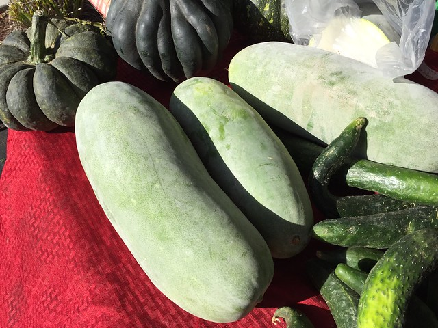 Winter melons