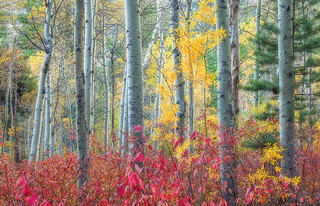Red, Green and Gold, Lee Vining Canyon