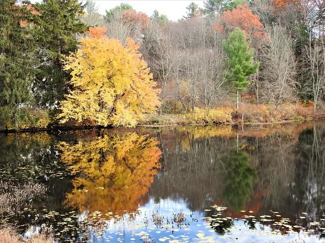 Fall reflection ~ Explored