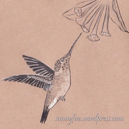 23 hummingbird