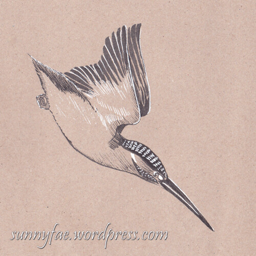26 kingfisher