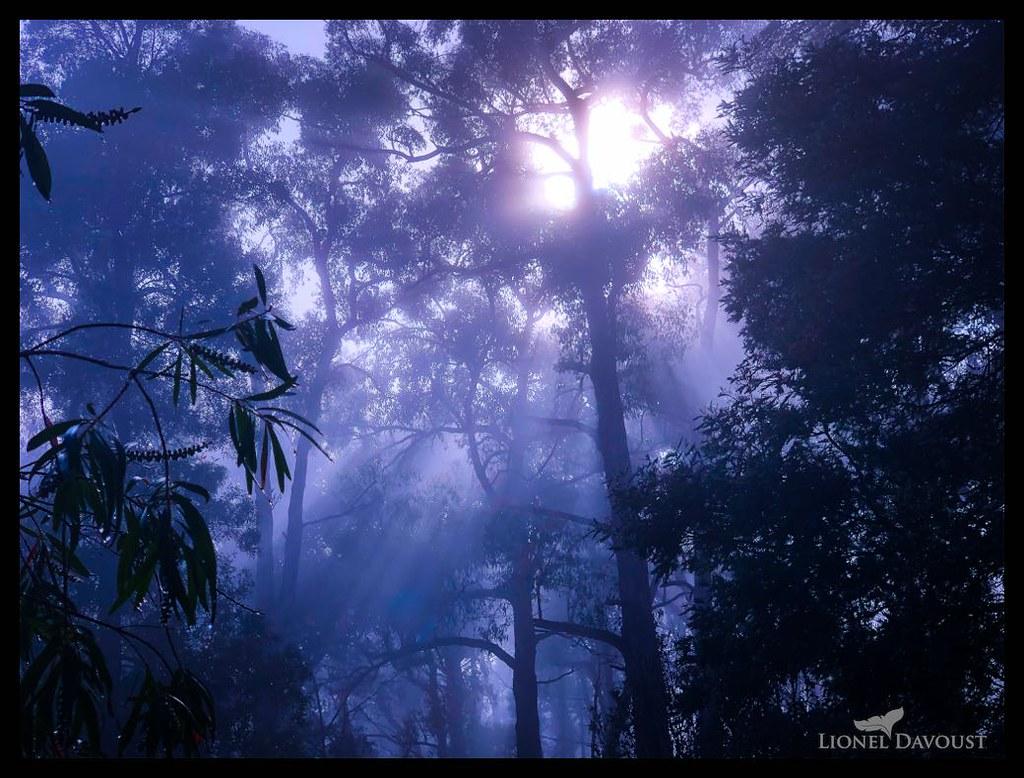 Australian dawn