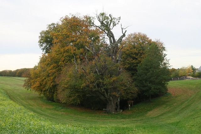 Couleurs d'automne au Luxembourg