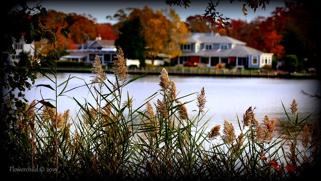 Fall Foliage Bayard Cutting Arboretum ~ Great River ~ Long Island, New York