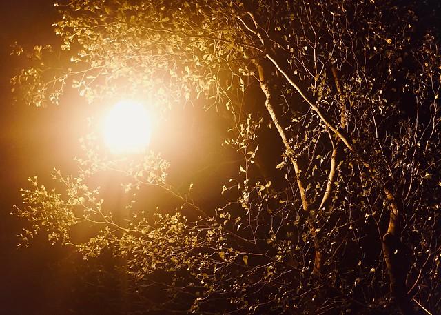 300/365: a walk in the night garden
