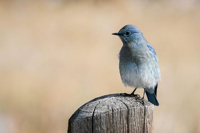 Bluebird[Explored]
