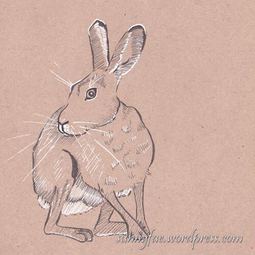 25 hare