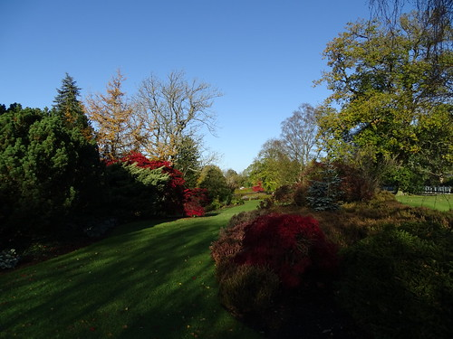 Autumn at Harlow Carr