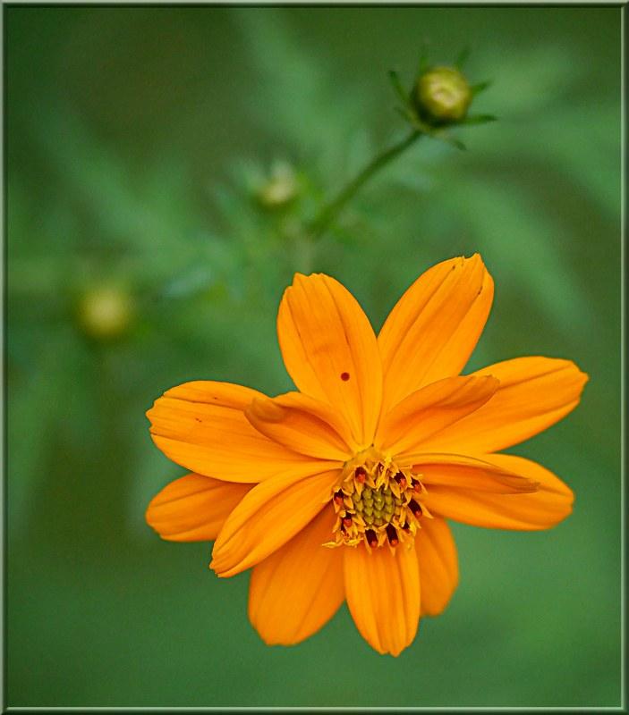 Au jardin des plantes. - Page 8 48972987342_91d9dd923b_c