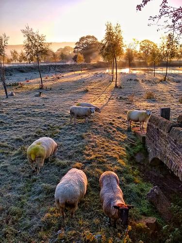 silsden steeton snapseed motorola sunrise sun aire valley fields mist misty sheep
