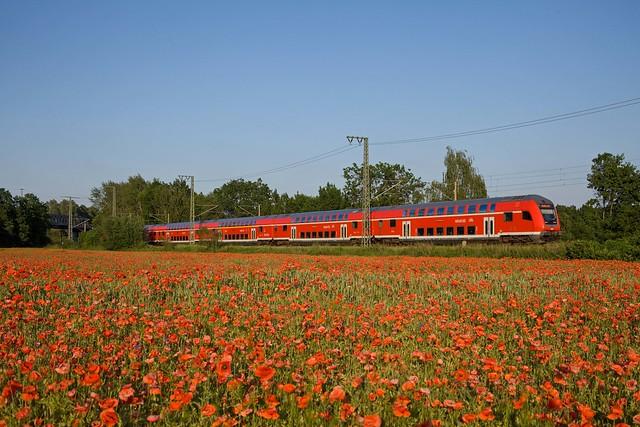 DB RE 3132 Eisenhüttenstadt - Magdeburg Hbf  - Kuhfort