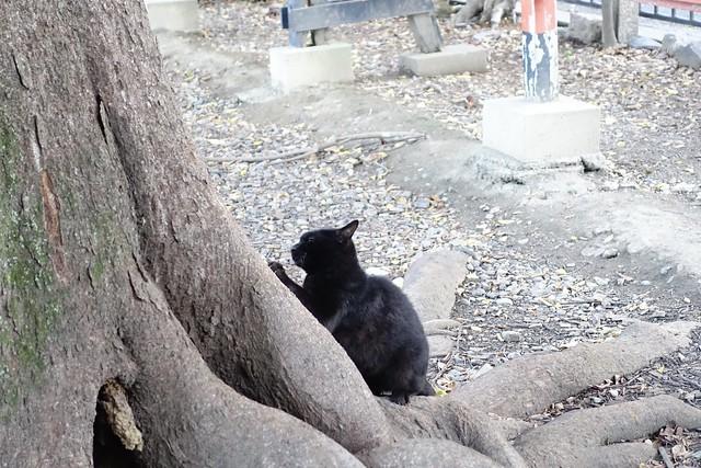 Today's Cat@2019-10-28