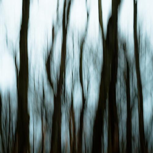 d5000 icm nikon abstract autumn blur branches distortion forest intentionalcameramovement landscape lines motion movement noahbw square treetrunk trees woods prairiewolfsloughforestpreserve