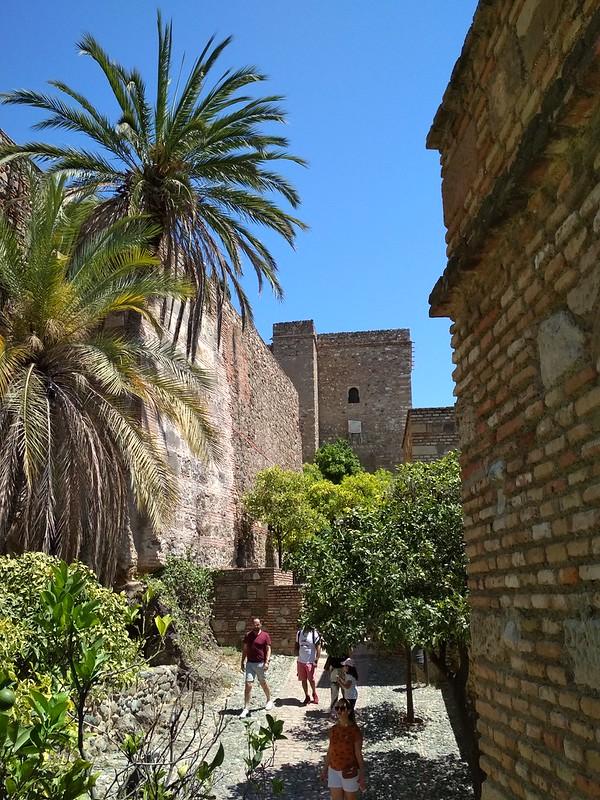 Крепость Малаги - Пальмы