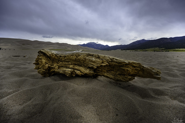 Lonely wood in Great-Sand-Dunes-Nationalpark - Colorado - USA