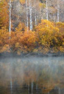 Rush Creek Aspen Mist