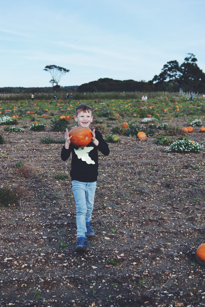 Walking in the pumpkin patch