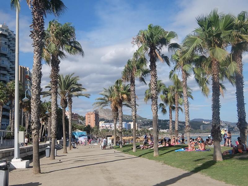 Малага - Пальмы у пляжа