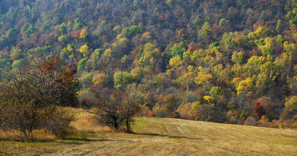Autumn in the Pilis Mountains, Hungary