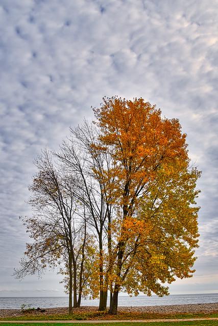 Marshmallow Skies
