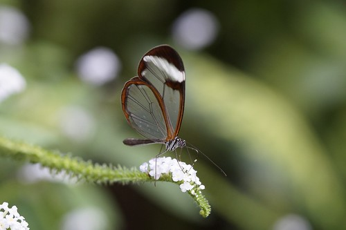Butterflies! From A Unique Christmas Experience: Winter Magic on Mainau Island