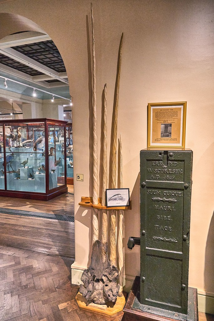 A click inside Whitby Museum