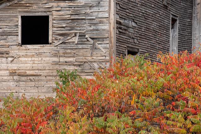Autumn Abandoned Barn