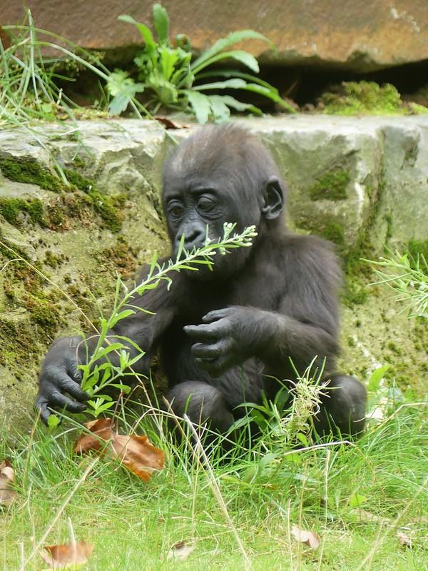 Zoo Antwerpen