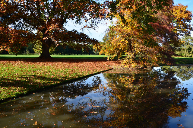 """""""Automne. Le post-scriptum du soleil."""" (Pierre Véron)  'Autumn. The post-scriptum of the sun.'"""