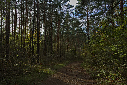 Forest Path | by pstenzel71