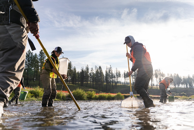 Dan Eiden (right) working on a fish reclamation project on the Grande Ronde River with the Umatilla Tribe, Trout Unlimited and the Forest Service