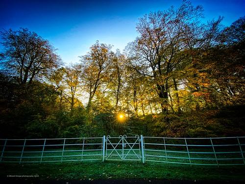 autunno preston haighton leavespreston gifts golden gold sunset sunrise sun leaf road roadleafsun fence fall autumn