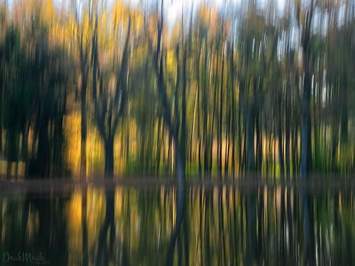 ICM - tree near the pond