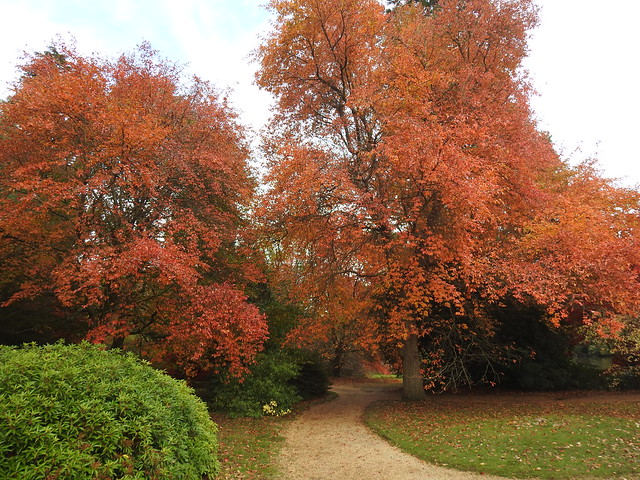 Autumnal colours at Sheffield Park Gardens