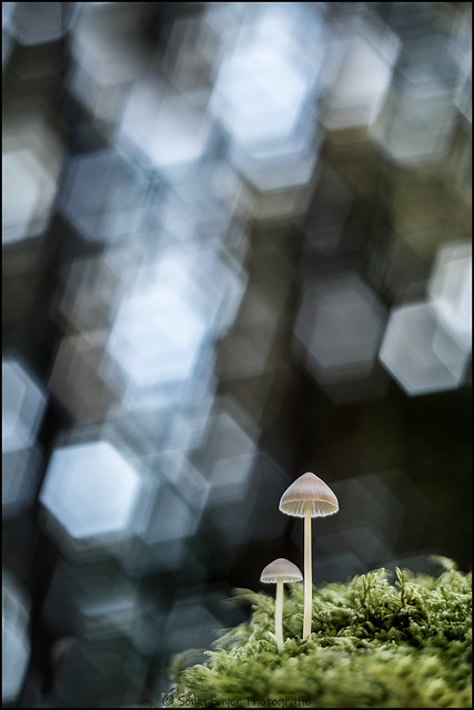 Mushroom Bokeh