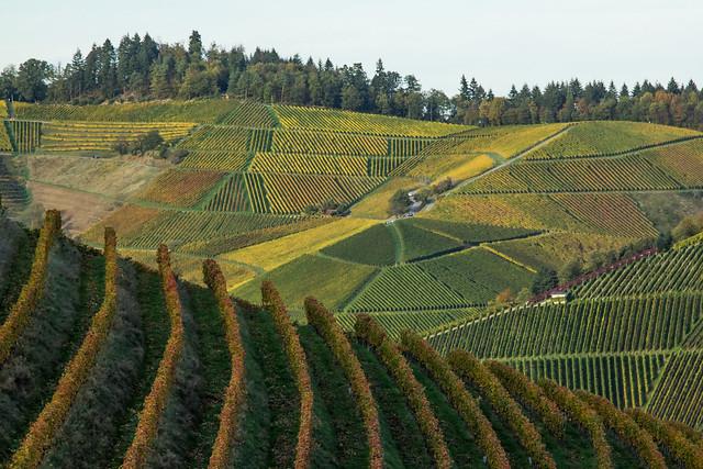 Géométrie viticole
