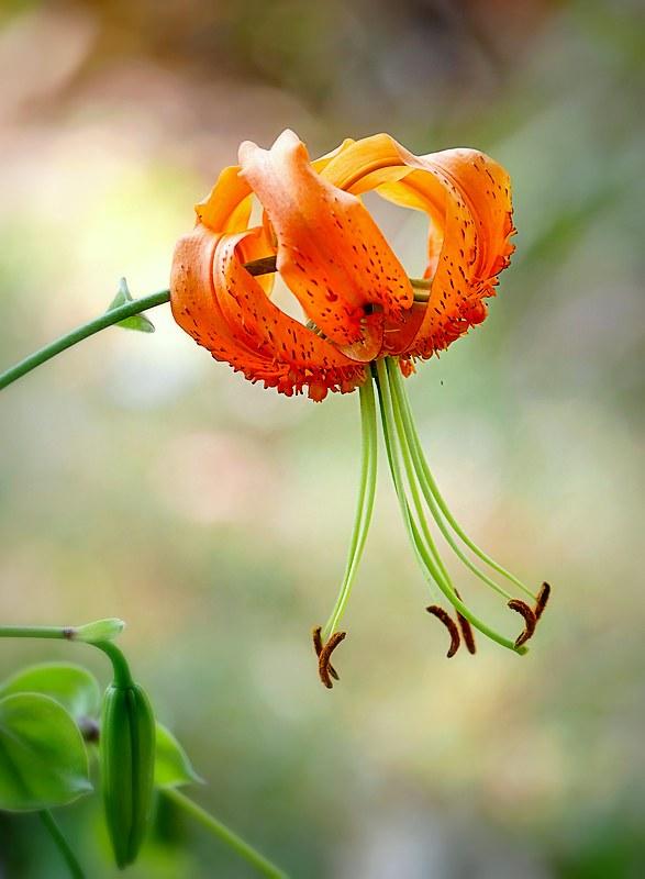 Au jardin des plantes. - Page 8 48976667128_0b1386b85e_c