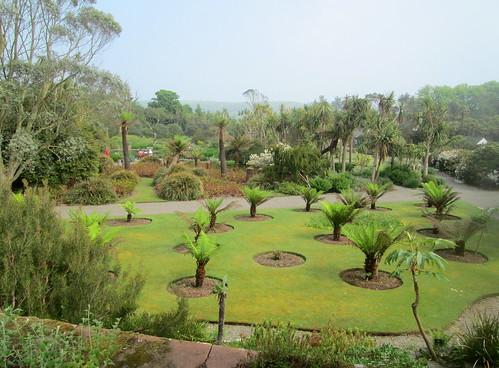 Ferns, Logan Botanic Garden